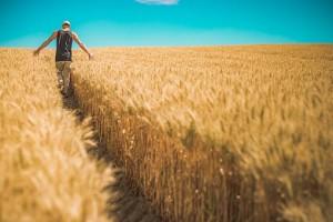 земеделски имоти