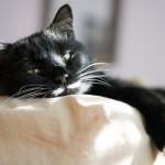 cat-3430571__340